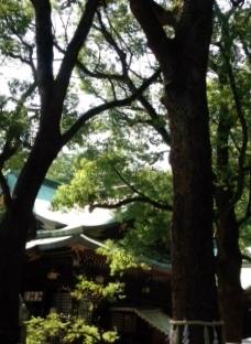 大宮八幡宮 (228x312).jpg
